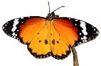 Monarch Program Link